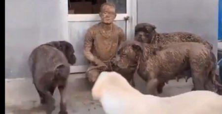 【動画】銅像?!みたいになって散歩から帰宅した犬達と男性が話題「何があった!?」