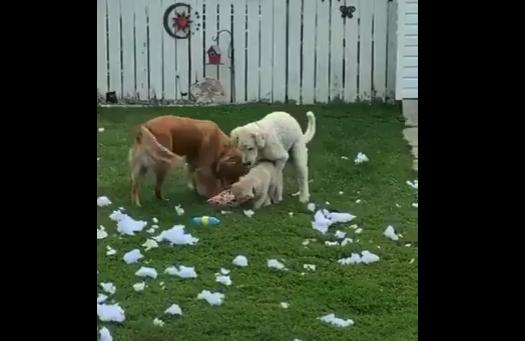 【反省】イタズラをした3匹の犬。飼い主の「視線」をキャッチすると・・・