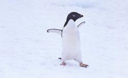 """【水族館】とんでもなく """"落ち込んでいる"""" ペンギンを発見。一体何があったんだ・・・"""