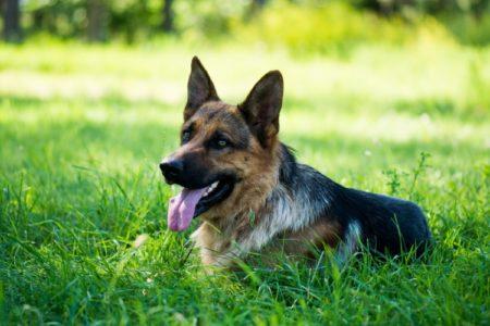 【驚愕】きちんと訓練された犬の「待て」が凄すぎる。一体どうやって教えるの!