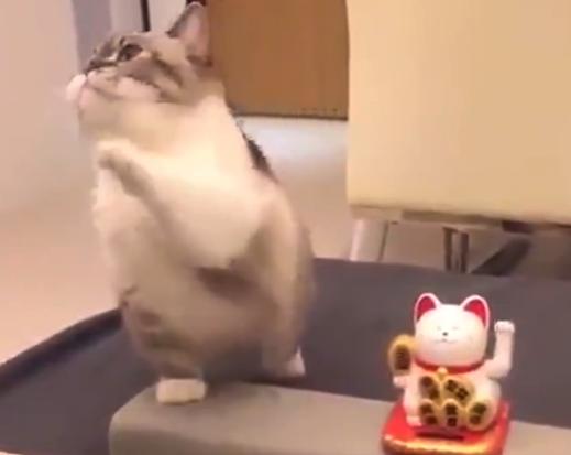 【詰め合わせ】猫の可愛さを「集約」した動画が完成。永久保存版ですな!