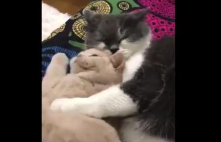 【猫】もふもふ同士の二人がもふもふし合って寝ている。尊さしか無い。