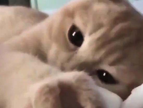 【猫】にゃんこさんと「添い寝」してる気分を味わえる動画をどうぞ!