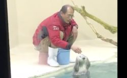 【鳥羽水族館】ラッコのお食事タイム、飼育員のおじさんとラッコのふれあいが最高だった…