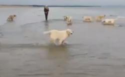 【水切り】ワンちゃんたちを海に連れてきたら、一匹だけテンションがおかしい!