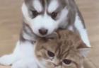 【癒やし】この子犬と子猫、マジで「天使」すぎる。夢の共演ですね!