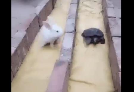 【競争】リアル「ウサギとカメ」お昼寝してないのにカメが勝っちゃう!