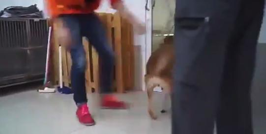 【義足】新しい足を犬にプレゼント。とても喜んでもらえた!