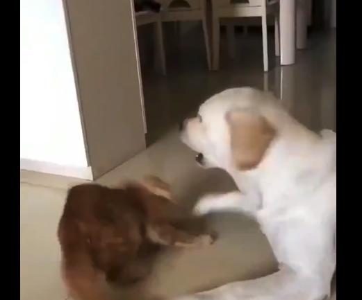 """【癒やし】犬に怒られないように優しく """"そーっと"""" 触れようとする猫が可愛い!"""