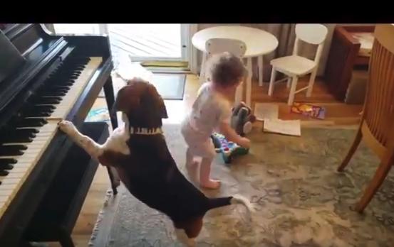 【幸せ】ピアノで弾き語りする犬。おもちゃで遊び回る子供。情報量がやばい!