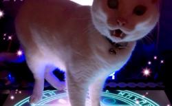 魔法陣から猫が召喚された瞬間を激写 『コンゴトモヨロシク…』