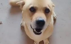 """【おいで】近所の犬が """"産みたての子犬"""" を見せつけてくる。こんなに小さいのか・・・"""