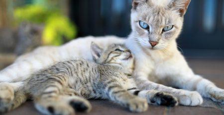 【愛】ピンチの子ねこを救出する母ねこ‥かわいくて、強くて、かっこいい