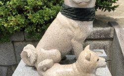 板橋不動尊のお犬様が可愛すぎるとネットで話題に!