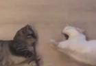 """【視線】動物園にて、アナグマの前を """"飼育係"""" が通ると・・・おなか空いてるのね。"""