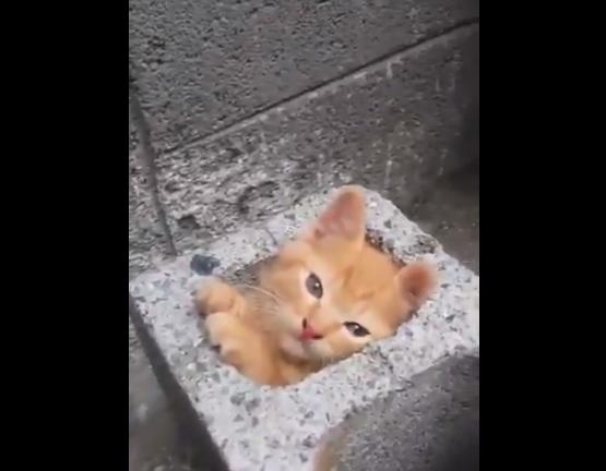 """【ぴったり】ブロックの穴に """"すっぽりと"""" 収まる子猫が可愛すぎる。ジャストサイズ!"""