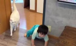 【動画】息子が転んだらすぐかけ寄る猫、なんて優しいんだ