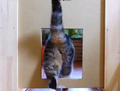 【猫は液体】どんな小さな穴でもへっちゃらさ!と思ったら最後・・・笑