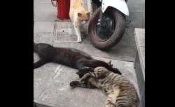 【不倫】浮気現場で嫁に遭遇してしまう猫が可愛い。これは修羅場だな!