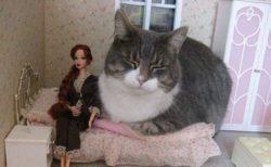 【画像たくさん】ドールハウスに侵入しちゃった猫ちゃんたち「不思議の国みたいな世界観!」「ねこでかっ!」
