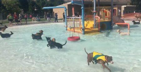 【動画】プール営業最終日、犬に開放。どの子もめちゃ楽しそう!!