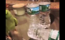 【得意気】ペットボトルを倒すたびに「報告」してくるインコが可愛い。