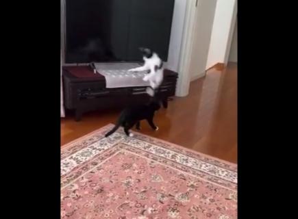 【シャキーン】どういう飛び方!?猫のジャンプにビックリ。流石の運動能力だな!