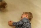 【猫!】古い家に住む親「死んだばあちゃんの部屋から音が・・」「座敷わらしみたい・・」→壁を切って確認すると子猫がぞろぞろ!!!
