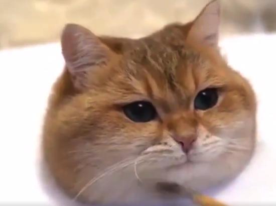 """【3D】立体的に描かれる """"猫の絵"""" がすごい・・・っておい!!!"""