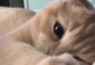 【動画】ねこ多頭飼い、布団をめくったら・・可愛すぎる♡