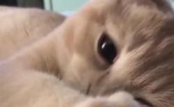 """【初々しい】""""同棲して2日目の朝"""" みたいな子猫が可愛い。このアングルは・・・"""