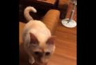 【サンシャイン池崎】猫よ、眠いからって「尻尾」で返事するな〜コノヤロ〜!!