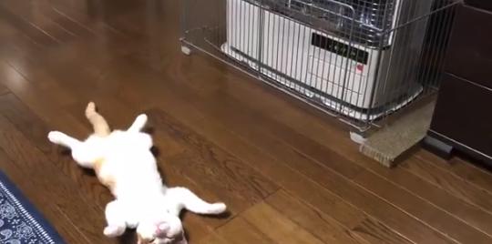 """【冬へ】人生初のストーブに """"やられてしまう"""" 猫ちゃんが可愛すぎる。"""