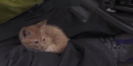 【凄い】猫を撮影するプロのカメラマン。頭に乗られても微動だにせず!