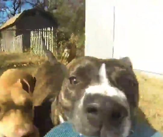 【GoPro】飼い主から盗んだ「カメラ」を咥えて走る犬が可愛い。なかなかレアな目線!