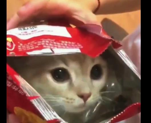 【召し上がれ】ポテチの袋に入る猫ちゃん。これは食べちゃいたいですな!
