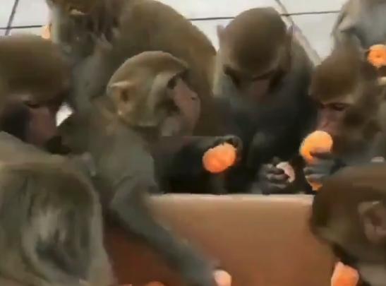"""【行儀】人間より """"マナーが良い"""" お猿さんが話題に。これは真似しないとね!"""