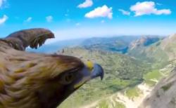 【ホークアイ】大空を自由に羽ばたく「鷹」にカメラをつけたら凄かった!