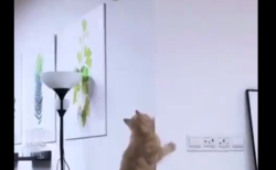 """【ひええ】運動神経が """"悪すぎる"""" 猫が可愛すぎる。オスだったらやばい!"""