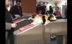 【電車】最新のセキュリティ(猫)を導入した改札機が夢のよう!