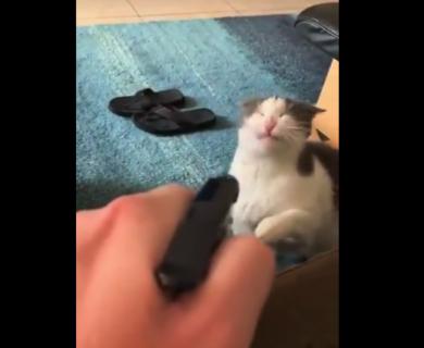 """【実験】猫が悪さしたら """"水"""" をかけると良い → 試してみたら全然効かねえ!"""