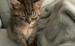 【ギリギリ】めっちゃ眠いけど寝ない猫ちゃんが可愛すぎる。何故そこまで頑張るの!