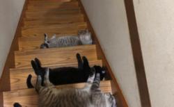 """【癒やし】階段で一列に """"ごろ寝"""" する猫ちゃんたち。これでは完全に降りれませんね・・・"""