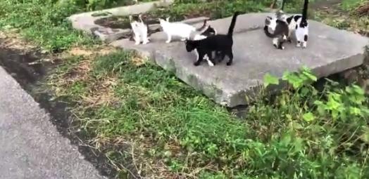 """【ニャー】散歩してたら """"猫の集会"""" やってたので参加してきました。貴重な体験!"""