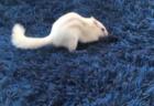 【面白い】食べるスピードの「不公平感」しかないアヒルの動画が話題に。猫ちゃんが食べれないぞ!