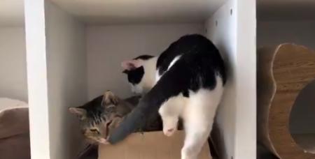 【液体】絶対無理だと思ったけど、入ってしまうのが猫ちゃんです。幸せそう!