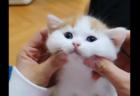 """【癒やし】猫ちゃんも """"ボール遊び"""" するんだね。催促する手が可愛すぎる!"""
