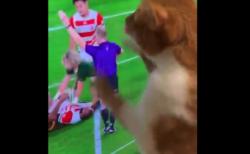 """【テレビ】ラグビーで誰よりも """"興奮"""" しているうちの猫。可愛すぎるでしょ!"""