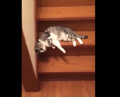 """【スルスル】階段を """"流れるように"""" 落ちていく猫が可愛すぎる。完全に液体!"""