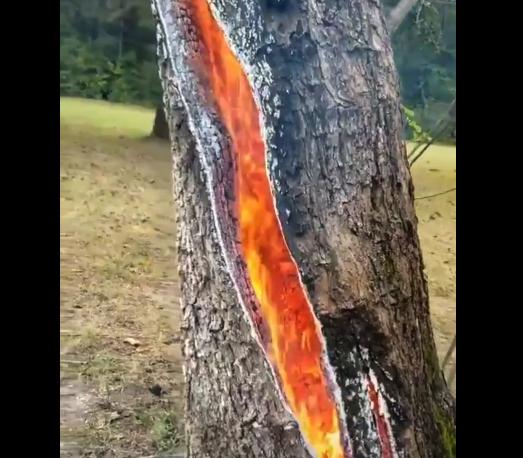 【驚愕】雷に打たれた「木の内部」がやばい。自然怖すぎ!